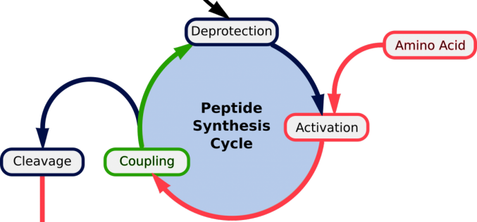 Why Peptide Synthesis