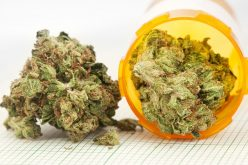 How Do You Gain Access to Medical Cannabis in Chicago?